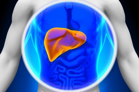Hepatitis liver Salerno Medical